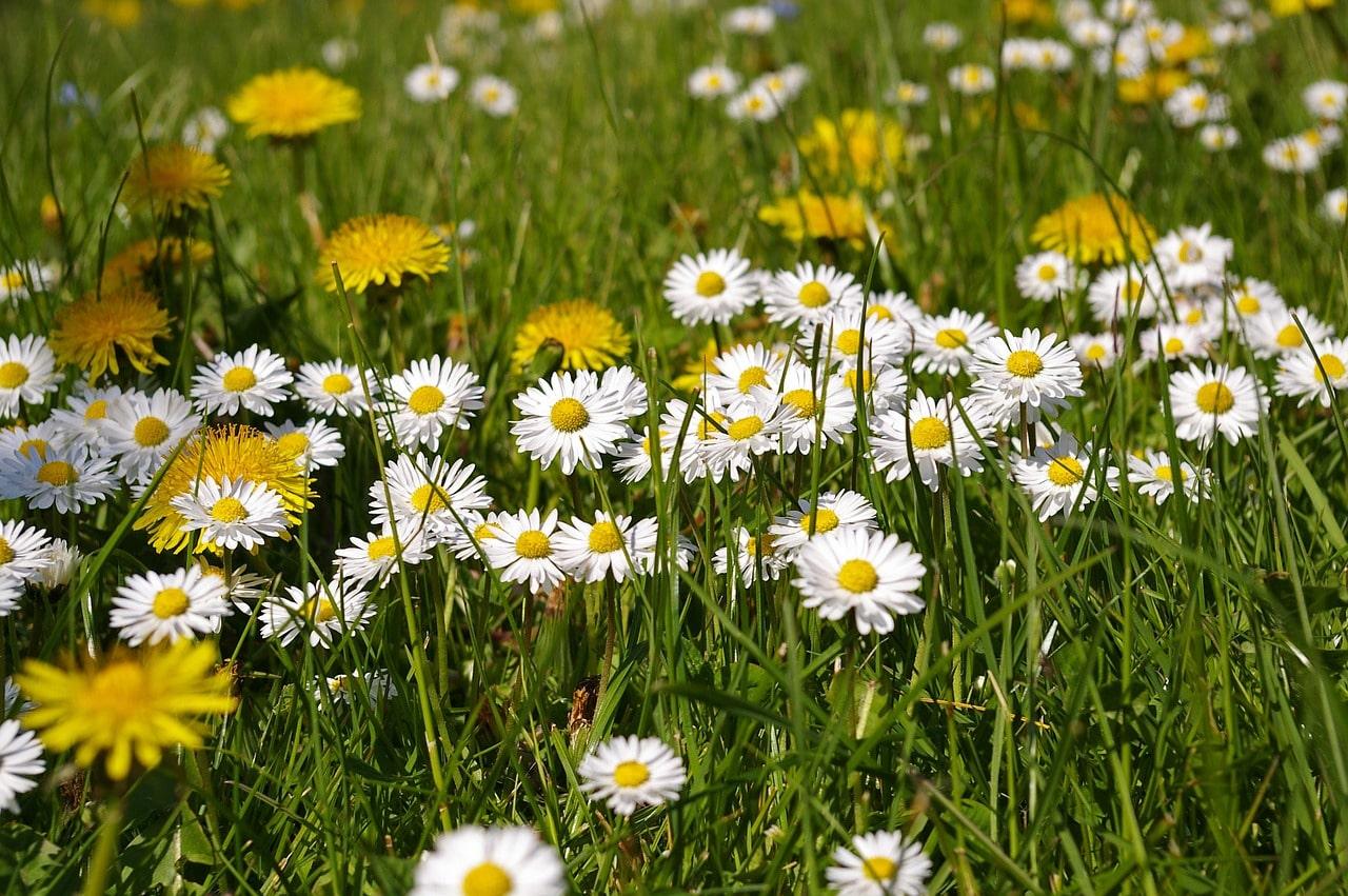 Consejos para tu aire acondicionado en primavera